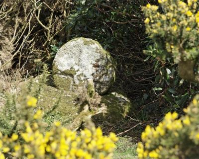 The ancient stone cross near Trengwainton Carn, framed by the golden gorse, once marked the Churchway that ran from Bojewjan in St Just Parish below Chun Castle through Great Bosullow and Boswarva to Madron.